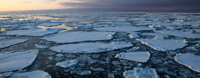 Pancake ice on Arctic Sea Ice. Photo: Dave Walsh davewalshphoto.com